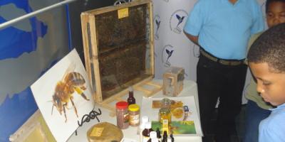 apicultura-04