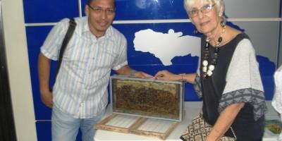 apicultura-08